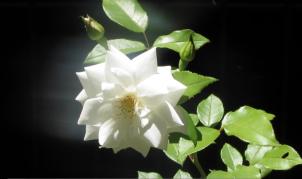 %22The dancing flower%22 by Tony Lobl