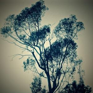 """""""Tree of life"""" by Tony Lobl"""
